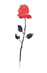 rose_seule